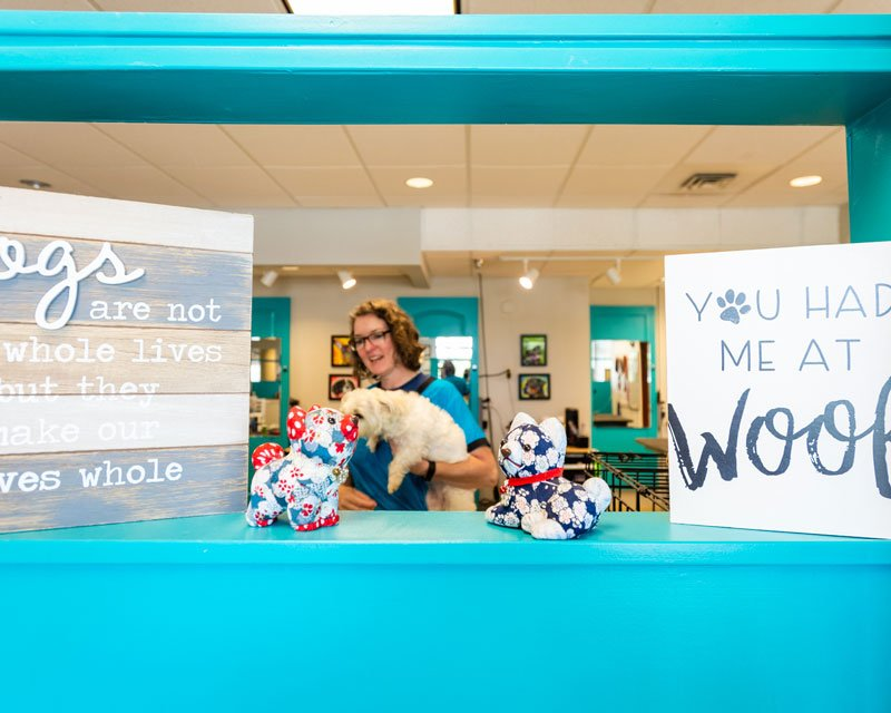 Best Dog Groomer in Blaine WA Canine Divine Pet Spa