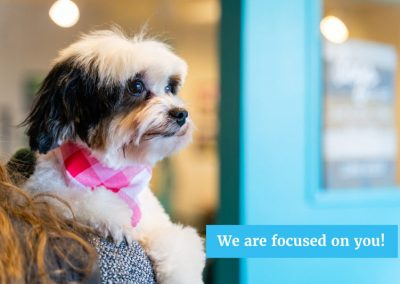 Best Groomer in Whatcom County Canine Divine