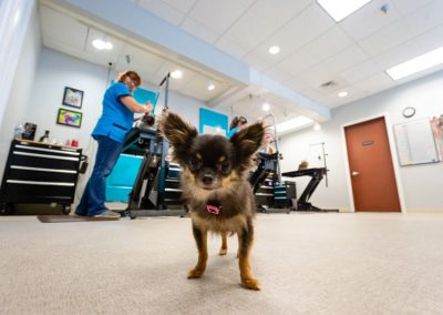 Groomer for small dogs Blaine